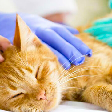 hospital-canis-mallorca-veterinario