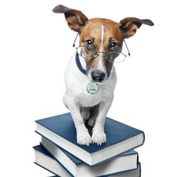 hospital-dog-canis-mallorca-veterinario