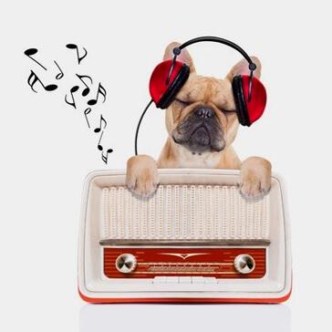radio-canis-mallorca-veterinario