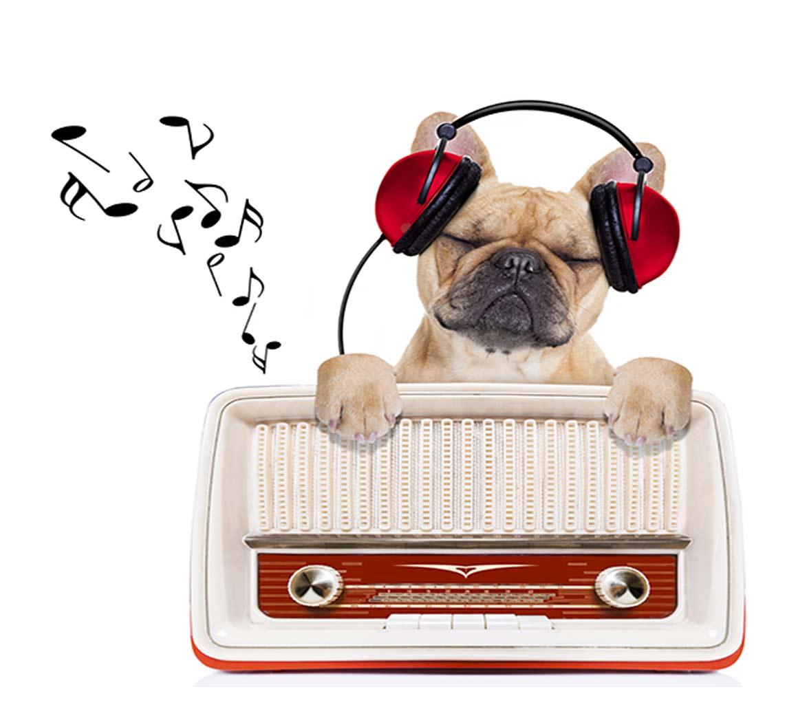 Programas de radio i hospital veterinari canis mallorca - Busco trabajo en palma de mallorca ...